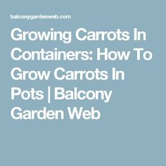 Growing Carrots In Containers: How To Grow Carrots In Pots | Balcony Garden Web