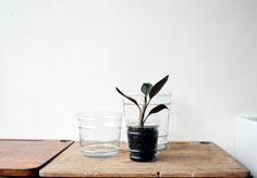 glass_planter_pot.jpg botany shop