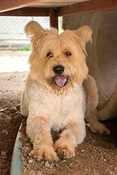My name is Otto and I am 4 and a half year old boy. Please adopt me. E-mail cristy@soidog.org to adopt me. I am a survivor of the dog meat trade. I was snatched from the streets. The people who took me planned to torture me to death because they thought it would make my meat taste better. The fear I felt was indescribable. https://www.facebook.com/SoiDogPageInEnglish/photos/a.927235817318154.1073743200.108625789179165/927235830651486/?type=1&theater