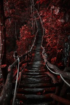 ~~The dark path never ends | forest trail | by Hanson Mao~~