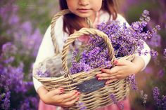 lavender field photo session, detsky portret, children portraits, natural light