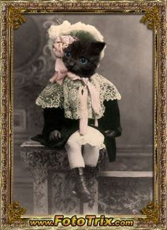 Macy Vintage 5x7 Cat Print Anthropomorphic by AnimalFancy