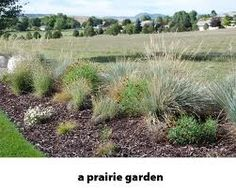 prairie landscaping google search hiding the septic tank