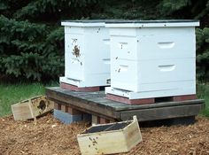 Newly hived bees