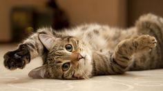 katt-rygg