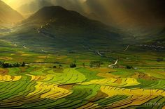 beautifual scenic view of the rice fields Champs, Cool Pictures, Cool Photos, Dame Nature, Rice Paddy, Rice Terraces, Nature Artwork, Broken Glass, Felder