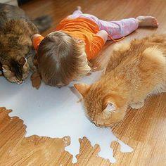 Kola smaker best i flaske og melken smaker best rett fra gulvet ; Bloom, Joy, Babies, Manga, Cats, Animals, Design, Babys, Gatos