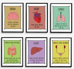 Set Of 6 Posters Carefully Designed For Decorating Clrooms Doctors Office Or Kids Room Each Poster Consists An Organ Ilration And A