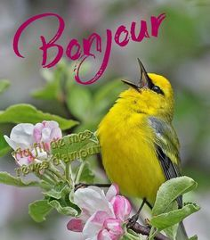 Bonjour French Greetings, Greetings Images, Goog Morning, Good Morning Quotes, Portuguese Quotes, Tu Me Manques, Bon Weekend, Morning Greeting, Morning Images