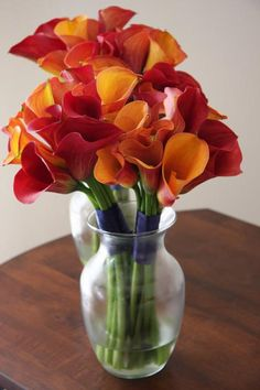 red and orange Calla Lilies together