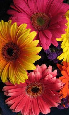 Beautiful Flowers Wallpapers, Beautiful Rose Flowers, Flowers Nature, Exotic Flowers, Amazing Flowers, Colorful Flowers, Spring Flowers, Sunflower Wallpaper, Flower Background Wallpaper