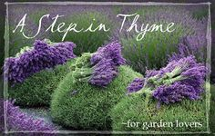 A Step in Thyme