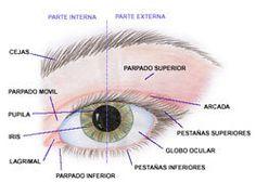 Partes del Ojo y Correcciones para tu Maquillaje