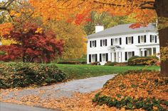Brighten your yard with fiery red and yellow autumn foliage