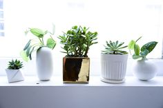 Man Repeller office plants by The Sill for Homepolish