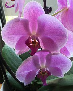 Apprendre à conserver et faire refleurir ses orchidées