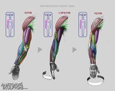 Resultado de imagen para fore arms references