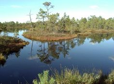 Bogs: An Online Guide