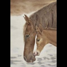 Helen Bailey - Texas  Mustang Motherhood - 24 x 17 inches  colored pencil, pastel pencil