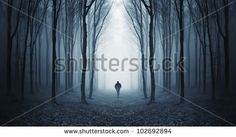 Dark forest wall mural, self adhesive photo mural Forest Trail, Forest Path, Dark Forest, Dark Side, Mysterious Universe, Photo Mural, Tourist Spots, Image Photography, Landscape Photography