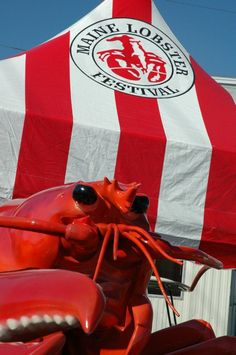 Enjoy an iconic Maine Lobster at the Rockland Lobster Festival!
