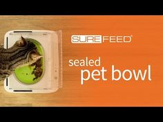 surefeed microchip pet feeder canada