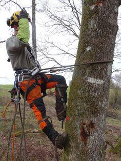 Tree Arborist, Lineman Love, Aquitaine, Survival Knots, Tree Felling, Kayak Accessories, Audi Rs3, Dordogne, Big Tree