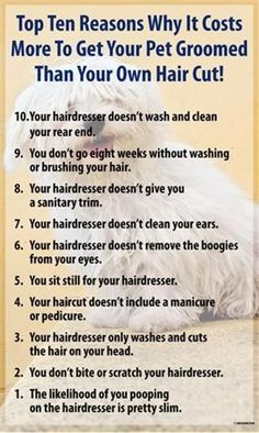 Whatever your groomer is charging, is worth paying instead of grooming your pet yourself. Not only is it safer for a professional to groom your pet. It is usually less stressful for you and the pet. Dog Grooming Shop, Dog Grooming Salons, Dog Grooming Business, Creative Grooming, Dog Haircuts, Dog Salon, Dog Care, Your Dog, At Least