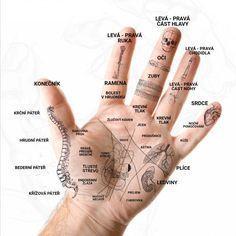 Výsledek obrázku pro akupunkturní a akupresurní body na ruce Acupressure Therapy, Acupuncture, Foot Massage, Palmistry, Health Advice, Alternative Medicine, Massage Therapy, Health Remedies, Health Fitness