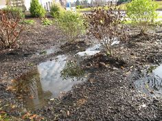 """Wet Feet"" of Ornamentals Garden Solutions, Plant Species, Roots, Sick, Environment, Backyard, Health, Water, Plants"