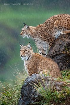 Photograph Downpour by Marsel van Oosten on 500px