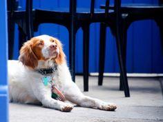 Best Pet-Friendly Restaurants InChicago - CBS Chicago