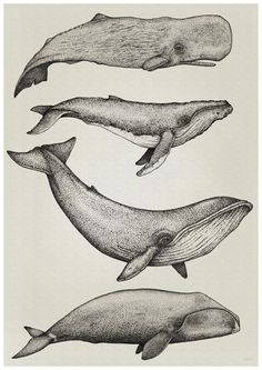 whale illustration - Google-Suche