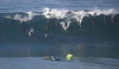 delfini sulle onde  http://www.uniquevisitor.it/magazine/delfini-foto-video.php