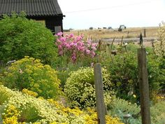 Photo by Anne Guy. Planting, Gardening, Plant Design, Coastal, Flora, Guy, Exterior, Outdoor Structures, House
