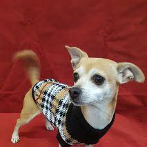#losangeles #dtla #petstore #dogsweater #pooch #poochie #lovely #sweet #amazing #petstore #petgrooming #petsupplies #pets #ucla #usc #westhollywood, #Hollywood