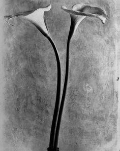 Calla 1925. Photo: Tina Modotti