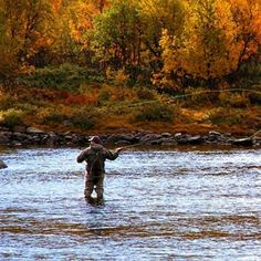 1000 images about fly fishing on pinterest fly fishing for Best trout fishing states