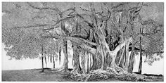 Federica Galli, The ficus of Parlemo (Sicily), mm 394 x 795, www.salamongallery.com | #realism #engraving #etching #ficus #palermo #sicily #nature #figurative #contemporary #art