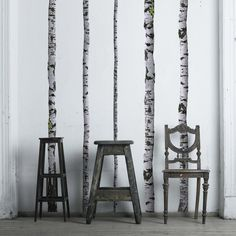 Super Real Birch Trees Decal