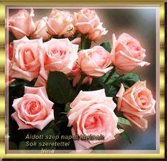 Roses Áldott szép napot.
