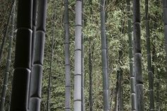 Bamboo Forest at Night - Photowall.nl