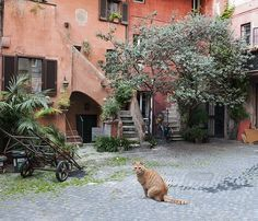 Beautiful courtyard in the centre of Rome, photographed with passion by www.gillyfish.com Beautiful Images, Rome, Centre, Passion, City, Rum, Rome Italy