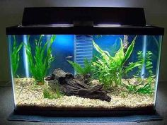 great set-up for a tetra tank!