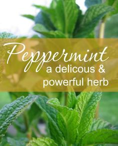Not only does peppermint taste good, it's a powerful herb for easing stomach problems, calming the nerves, as an energizing pick-me-up, and much more.http://www.medicinal-botanicals.com/