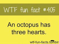 wtf facts | WTF-fun-facts : funny & weird facts | We Heart It