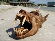 Thanks to the Internet we are able to see a lot of freaky unexplainable photos of creatures we are tempted to call monsters. These are top 5 weirdest creatures ever found on the face of Earth. The Stranger, Scary Fish, Weird Fish, Weird Sea Creatures, Rare Animals, Strange Animals, Bizarre, Arte Horror, Sea Monsters