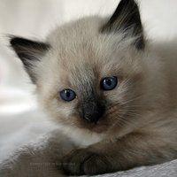 cat photo: cat e75b9ceb98469b098e5451b866188825.jpg
