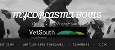 This is a reference site for Mycoplasma bovis, bringing together all of the latest information in one place so you can keep up to date. The site is administered by Vets South Create An Animal, Bacterial Diseases, Reference Site, Press Release, News Articles