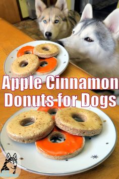 DIY Donuts for Dogs More
